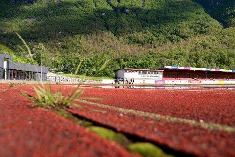 FORFALL: Friidrettsmiljøet blømer medan ugraset spirer og gror i sprekkane på løpebana. Dekket må bytast for at Jotun stadion skal bli godkjend for konkurranse igjen.