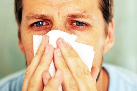 ALLERGI: Ei smeltetablett som har synt klinisk effekt i pollensesongen er no godkjent på blåresept av Statens legemiddelverk.