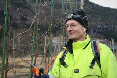 ALLSIDIG: Sogningen Svein Ølnes klypper frukttre mens han høyrer på podcast om bitcoin. – Eg gler meg til eg skal ut og jobba, og enno meir til å høyra om favorittemaet. Det er vinn-vinn, seier han.
