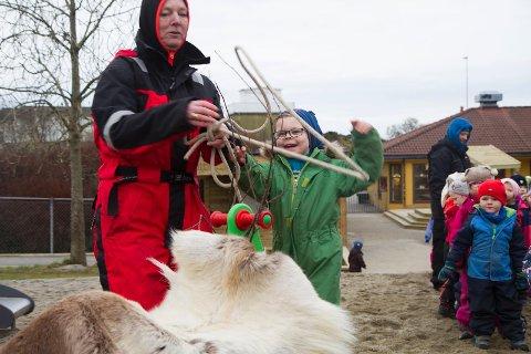 Reinsdyret klarte ikke unnslippe lassoen til Mathias Svendsen i Risnes barnehage.