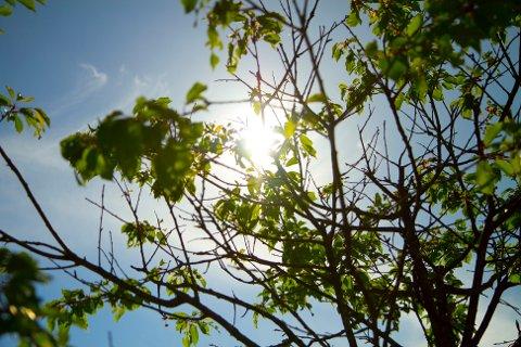I morgen blir det nesten like varmt i Sola som i Barcelona.