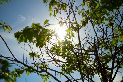 Sola skal titte fram denne uken, men temperaturene holder seg litt lavere enn man skulle ønske.