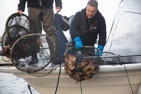 Denne dysa var full av krabbe da Ove Olsen hentet den opp nære land i Sømmevågen.