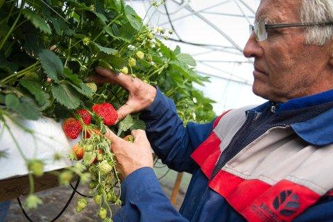 Jordbærbonde Jakob Mæle håper myndighetene letter på restriksjonene når høysesongen nærmer seg, og behovet for arbeidskraft øker på.