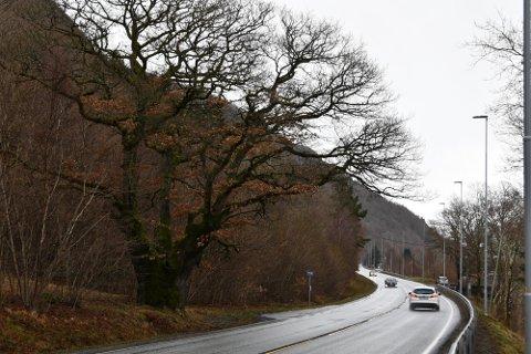 GANG- OG SYKKELSTI: Om litt mindre enn to år vil det være gang- og sykkelsti ved veien her ved Hole Eika.