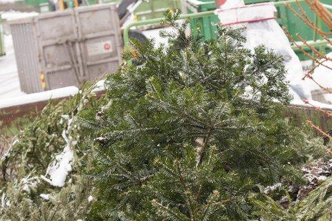 GJENVINN: Juletreet skal gjenvinnes og kan leveres på Gjenvinningsstasjoner - helt gratis.