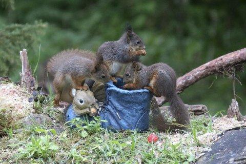 Nøttegodt: Fra Heidi Havres hage med glimt av de små dyrenes liv, her er det Tipp, Topp og Doffen som nyter sommer og mat