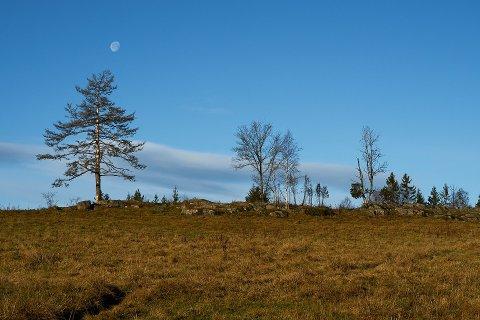 77 personer vil bli naturforvalter i Drammen kommune.