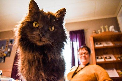 GOD HØRSEL: Siden katter hører lyder høyere enn mennesker, er det lett å forstå at nyttårsaften virker skremmende for kjæledyra. Foto: Louise Johnsen Weseth