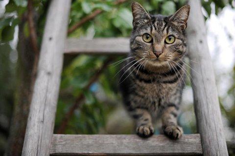 Katter klarer seg ikke selv i naturen, og de formerer seg kraftig om de ikke holdes under kontroll. Foto: Frank May (NTB scanpix)