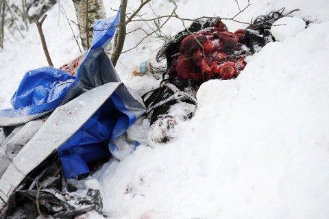 DUMPET: Det er høyst sannsynlig avfall etter slakt som er dumpet i skråningen ved Pikerfoss rasteplass. I tillegg til deler av en hest, blant annet hodet, er det også dumpet blodige plastkasser og presenninger. Foto: Torgrim Gotland Bakke