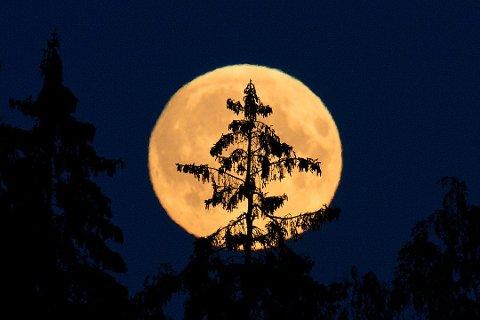 Fullmåner er tradisjonelt sett skumle greier, og for mange blir det ikke mindre skummelt av at det er fredag den 13. samtidig. Fredagens fullmåne er til og med en sjelden mikromåne, og det er 13 år til noe sånt skjer igjen. Illustrasjonsfoto: Jon Olav Nesvold / NTB scanpix