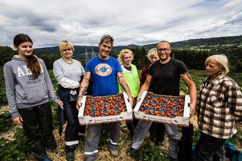 JORDBÆRGLEDE: Her er Svein Tore Eriksen (i blå T-skjorte) sammen med noen av sine trofaste medarbeidere fra Polen under innhøstingen i 2015.