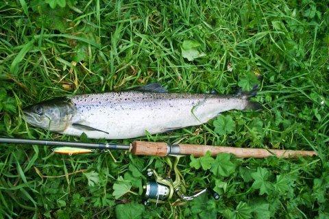 ULOVLIG: Fisker du etter laks ulovlig risikerer du etter 1. juli å bli straffet mye hardere enn tidligere.