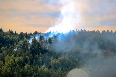 BRANNFARE: Slik så det ut da det begynte å brenne i et større skogområde i Bamble mandag. Nå frykter meteorologen at det skal skje igjen. Foto: Theo Aasland Valen