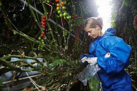 Plantehelsen i Norge er fortsatt god sammenlignet med andre europeiske land, men den gode statusen er truet av nye såkalte planteskadegjørere; bakterier, virus, soppsykdommer og insekter skriver Karen Johanne Baalsrud. Illustrasjonsfoto