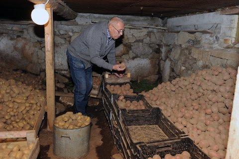 Peder Torbjørn Aae (87) har på det meste dyrket ni forskjellige sorter poteter. I år nøyer han seg med fem. Sunndalspoteten Folva er ny av året i jordkjelleren på Å.