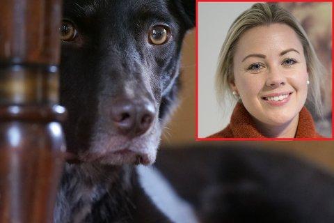 Nyttårsaften er den dagen i året da flest hunder kommer på avveie. Kine Bjølsen Opstad vet råd.
