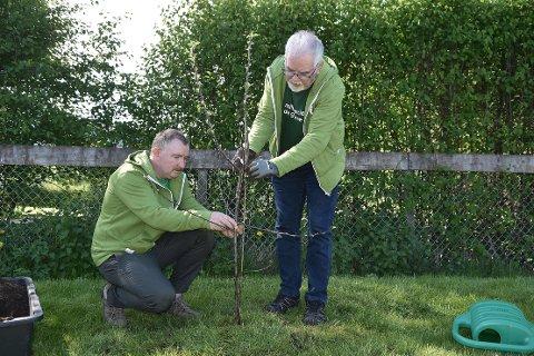 MILJØDAG: Trygve Roaldset og Erik L. Moen fra Miljøpartiet de Grønne planter et epletre ved Øye barnehage i Surnadal for å markere Verdens miljødag.