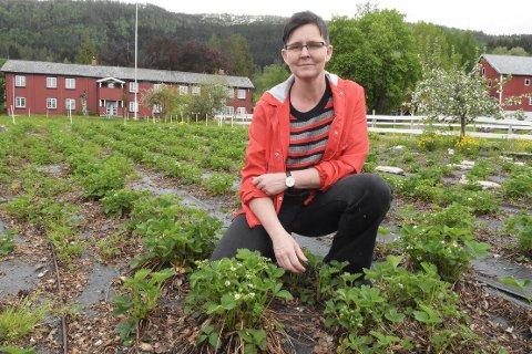 MANGE PROSJEKT: Nina Torvik i Opp & Ut i Torvika i Surnadal, har mange planer for aktiviteter knyttet til gården. Søndag er det Åpen gård, mens det kan bli «Jordbær og Chamapgne»  senere i sommer, der det blir ppubkvelder med musikk eller quiz.