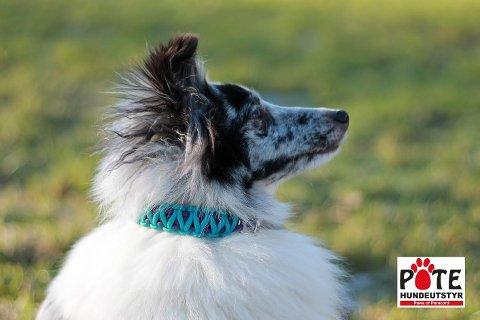 HUNDEDESIGN: Pote Hundeutstyr produserer egne produkter til hunder som er laget avparacord og fleece. Disseer tøyelige slik at hunden ikke pådrar seg nakkeskader.