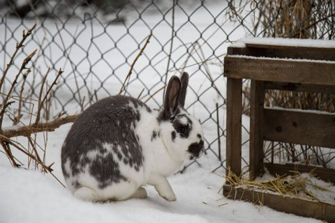 KRISE: Dyrebeskyttelsen Tønsberg-Horten får ikke tak i nok frivillige til å stille opp som fosterfamilier for dumpede kaniner. Nå har de startet en innsamling til et kaninmottak, slik at de kan ta i mot flere.