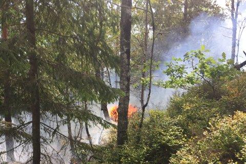 OPPDAGET SKOGBRANN: Dette bildet er tatt av brannvesenet da de kom til stedet. – Takk til dere, skriver de til tipserne.