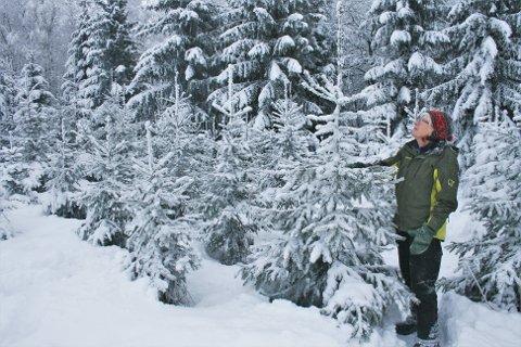 MYE ARBEID: På sommerstid må det jobbes mye for at de nyplantede trærne ikke skal bli overgrodd av gress og annet. Vel ti år senere når de vanlig juletre-størrelse slik som dette, forteller Ingrid Helene Tollefsrud Nyhaug.