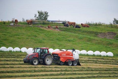 Traktor, rundballer, dyrefór, fórkrise, husdyr, kyr, ku,   Landbruk, jordbruk.  Det er på tide med et grønt teknologiskifte i landbruket mener Norges Bondelag og Norsk Landbrukssamvirke. De to instansene lanserer en tiltakspakke som de ønsker inn i statsbudsjettet allerede fra 2021.