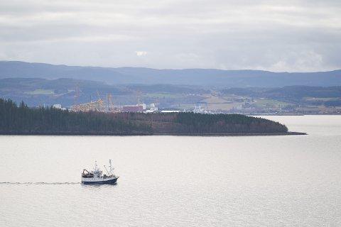 FISKER ETTER BRISLING: Brislingfisket i Trondheimsfjorden er svært omstridt – blant annet fordi det ikke finnes en egen kvote for brislingen i fjorden.