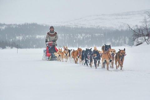 TRENER: Hundesledekjører Michael Kvilaas og hundespannet på vei over Storgollomsvatnet.