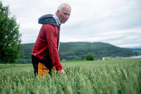 LOVER GODT: Kornbonde Øyvind Austad i Inderøy bruker mye tid og ressurser på høsthveten. Foreløpig ser det veldig bra ut, mener han. Når det gjelder bygg er situasjonen mer usikker flere steder i Trøndelag.