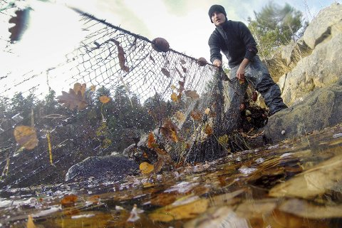 Fiskeforbud - eller ikke? I løpet av vinteren må politiikerne bestemme seg for om de vil videreføre bavaringsområdene eller åpne opp for fiske.         Tvedestrand er den første kommunen i Norge som tar en slik avgjørelse.Foto: Havforskningsinstituttet