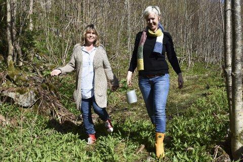 Bugnende, generøs natur: Siri Fossing (til venstre) og Ida Monrad Haugen sanker råvarer i et hav av ramsløk i Ramsdalen i Tvedestrand. Foto: Anne dehli Straum
