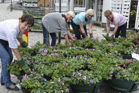 Blomsterdugnad: Dette er noen av dem som tirsdag jobbet for å gjøre byen blomsterfin. foto: marianne drivdal