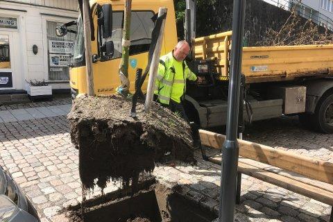 Inge Ramleth i Tvedestrand kommune fjerner restene av det brukne lindetreet. Foto: Olav Loftesnes