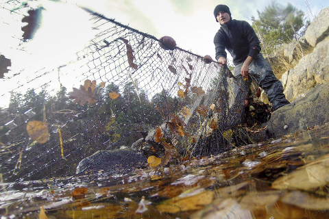 Fiskeriministeren kommer både motstanderne og tilhengerne av fiskerestriksjonene i møte. Foto: Havforskningsinstituttet