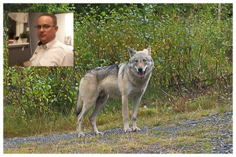 Roger Bendiksen er sikker på at han så en ulv i veien i natt.
