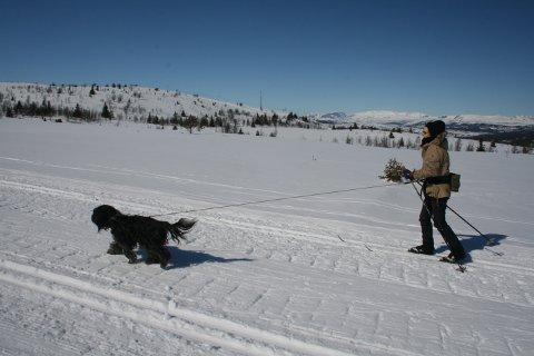 Båndtvang: Båndtvangen som ble innført i midten av februar i alle Valdres-kommuner, gjelder fremdeles.