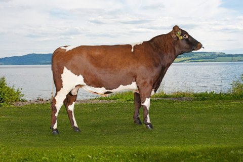 11992 Riste fra oppdretter Gullik Riste, 2967 Lomen.