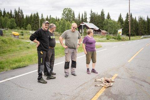 FRUSTRERTE: Knut Johan Holden, Leif Åbjørsbråten, Atle Loberg og Astrid Haadem har dyrene sine på beite i området, og er frustrerte på vegne av husdyras ve og vel. Nå krever de reaksjoner fra politi og vegvesen. Dette lammet ble påkjørt natt til mandag.