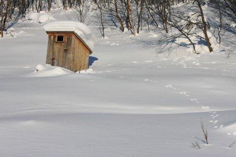 SPOR I SNØEN. Rune Fjellvang i Naturspeilet skriver om yetier og bjørnespor som viste seg å være noe helt annet. Foto: Are G. Nilsen, Wikimedia Commons