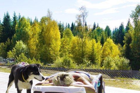 Det hører med til sjeldenheten at man opplever at bjørka blir gul mens man ennå kan nyte sommer og sol. Foto Ole-Johnny Myhrvold.