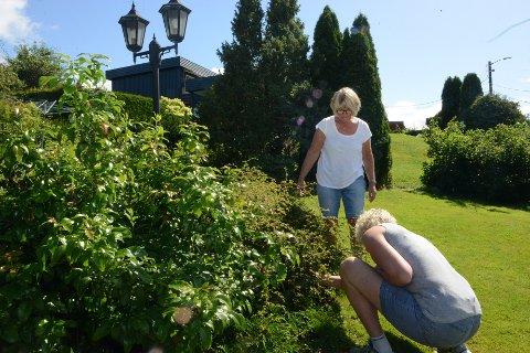 KAMPEN MOT SNEGLEN: Brunsneglene er et sikkert vår- og sommertegn. Unni Sem (bak) har heldigvis ikke hatt et så stort problem med dem i hennes hage.