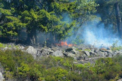 SKOGBRANN: I fjor var det knusktørt og svært høy skogbrannfare. Foto: Håvard Krågsrud