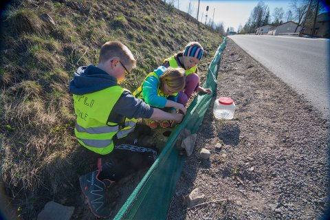 GODTDOKUMENTERT:Elever fra Sørli skole undersøker amfibienes vandringsmønster fra Vassøytjern mot Gjøvikbanen. Arkivfoto: Jeroen van der Kooij