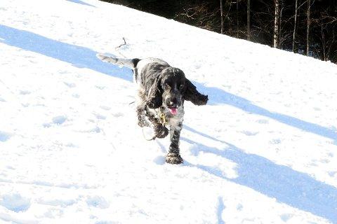 NEST VANLIGST: Her er en Bella i fint driv en vinter da det var snø. Luna var imidlertid et enda vanligere hundenavn i 2019.