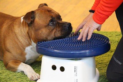 FÅR ROS: Canis hundeskole bruker belønningsbaserte metoder og positiv forsterkning på sine kurs.
