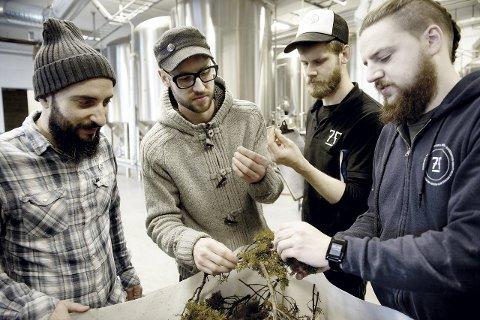Einebusk: Bobby Hall fra høyre, Torvald Storaas viser frem einebuskene til engelske Dave Seymour og Geremy Luz, som brukes i bryggingen.