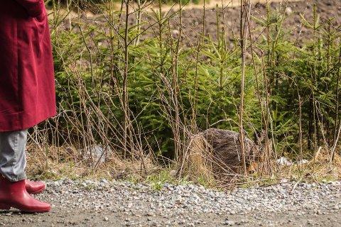 NÆRT MØTE: Stig Hansson og en forbipasserende kvinne fikk et nært møte med et rådyr i Hvitsten.